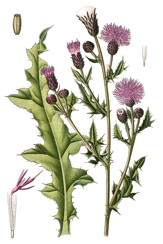 Bedwelming Wilde bloemen op kleur, bloeimaand en bloemvorm - determineren &ZH65