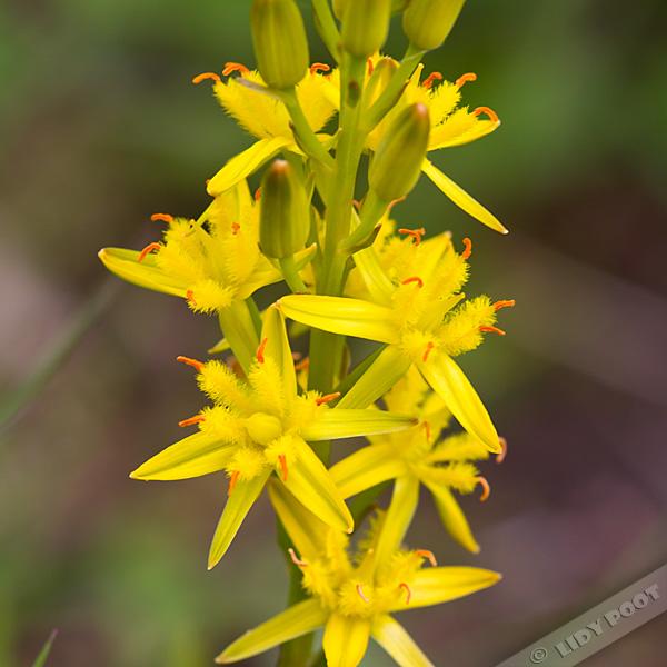 gele bloemen herkennen
